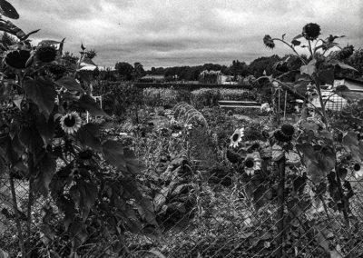 jardins familiaux sur Montivilliers