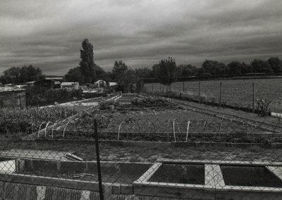 jardins familiaux - potagers